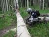 wilson-mesa-trail-clearing-033