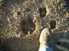 bull-elk-track_loghill_16sep04